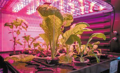 无土种植 气培法为人类迁移火星做准备