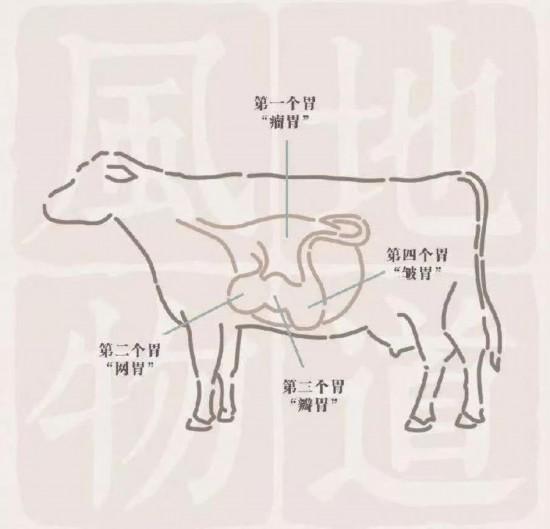 牛瓣胃独特的结构,是为了处理难以消化的青草.图/乌堆