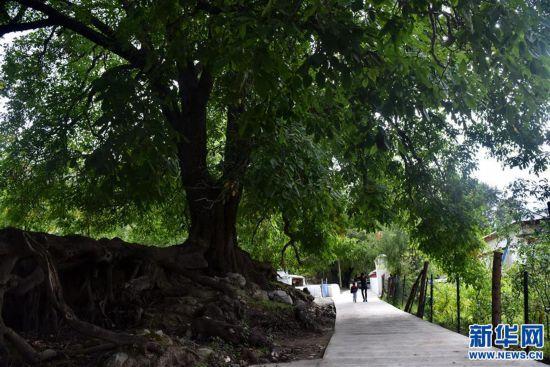 (图文互动)(3)家庭小旅馆 藏乡致富路――西藏朗县冲康村见闻