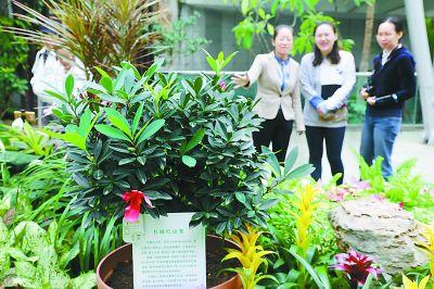 <b>50余种世园会珍植首次北京安家 150余种珍稀植物落户植物园</b>
