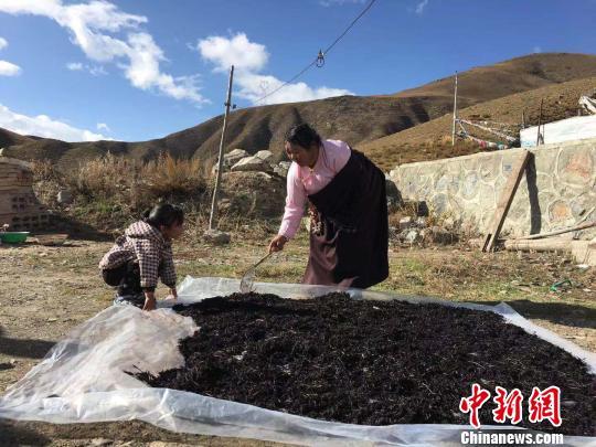 青海公益扶贫项目助力藏区贫困牧