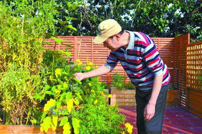 居委会楼顶变身空中共享菜园 居民自耕自种收获新鲜蔬果