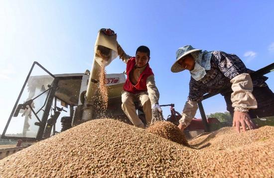 江蘇金湖:深化綜合改革 激發農村發展磅礡內力