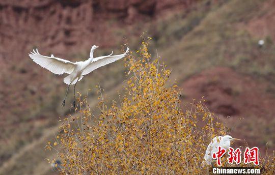 http://www.zgqhl.cn/wenhuayichan/23410.html