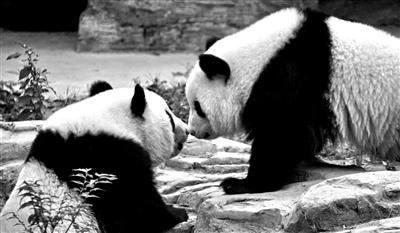 http://www.uchaoma.cn/shehui/1194562.html