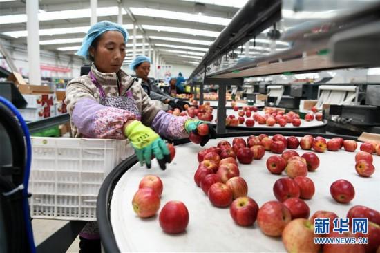 (社会)(1)贵州威宁:产业扶贫结硕果