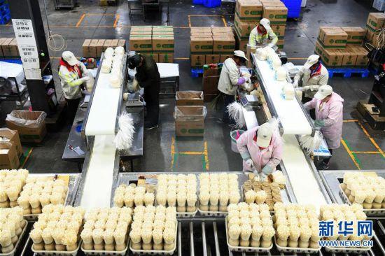 (社會)(4)貴州威寧:產業扶貧結碩果