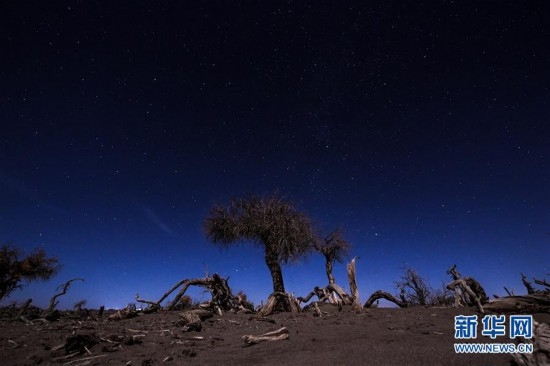 """(环境)(2)大漠""""怪树林"""""""
