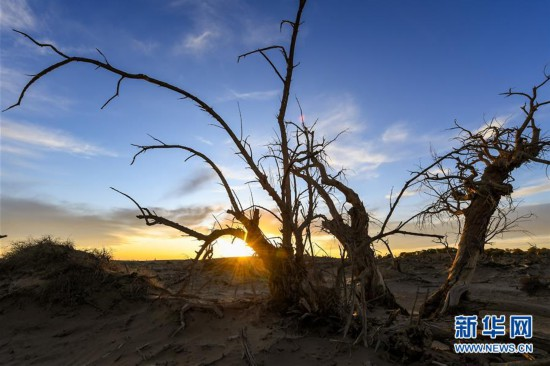 """(环境)(1)大漠""""怪树林"""""""