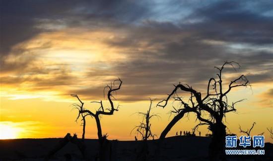 """(环境)(3)大漠""""怪树林"""""""