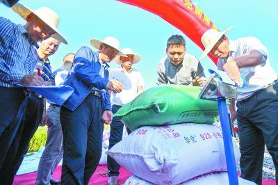 1046.3公斤!袁隆平第三代杂交水稻测产