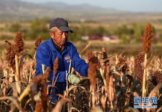 (经济)(1)内蒙古呼和浩特:收获晚熟作物