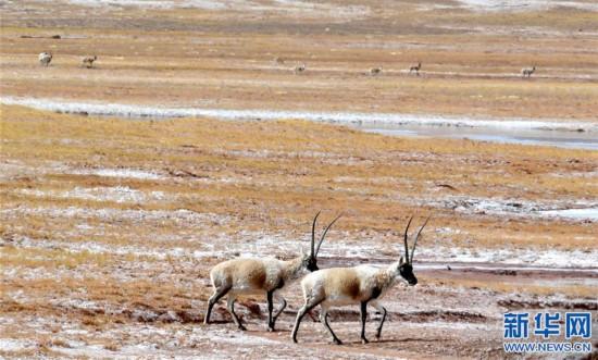 (新华视界)(5)快三有哪些号码_上海快三app主页-藏双湖:野生动物的天堂
