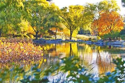 北京11个市属公园20处秋景进入观赏期