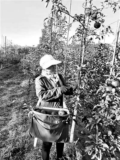 """打造特色农业全产业链帮扶模式 顺平瓜果从石景山""""燃""""起来"""