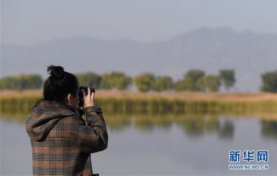 自然观察节走进北京野鸭湖