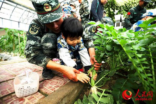 武警战士与小朋友一起拔萝卜。