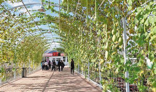 """<b>建好菜园和花园 百姓收入更多""""源""""</b>"""