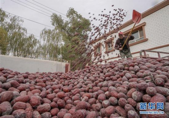 新疆若羌紅棗富農家