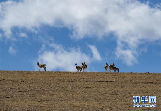 西藏日喀则:美丽的佩枯错
