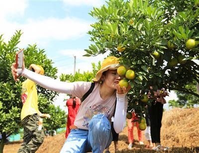 琼中:四条采摘线路六大果园让游客啖足绿橙