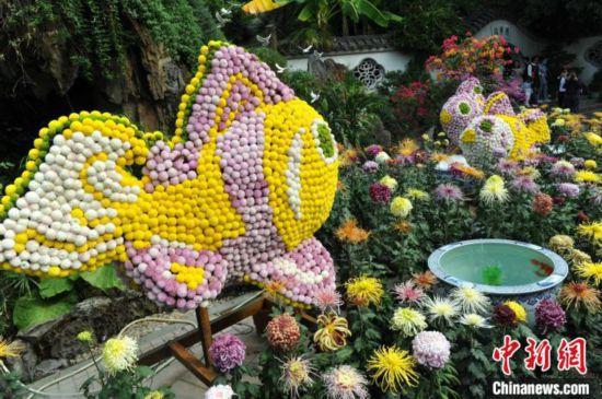 20000余盆菊花扮靓福州西湖公园引游人
