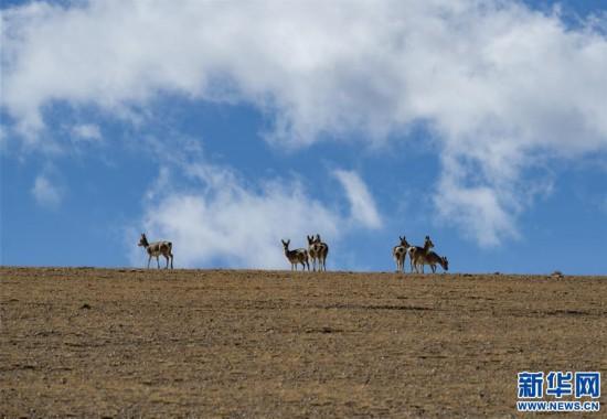 (美丽中国)(3)吉林今日快三走势,西藏日喀则:美丽的佩枯错