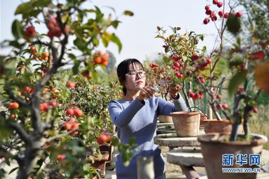 (经济)(1)河北泊头:盆栽果树富农家