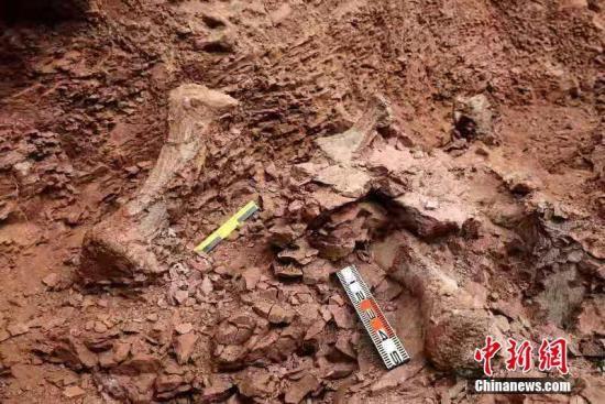 """甘肃永靖县再次发现巨型恐龙骨骼化石 名副其实的""""恐龙之乡"""""""