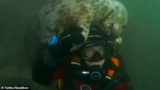 英国一男子潜水遇灰海豹与其互动嬉戏