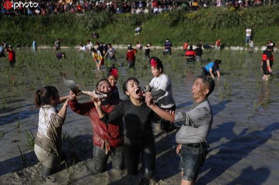 贵州雷山苗族举办新年捉鱼比赛 老老少少争相在稻田摸鱼