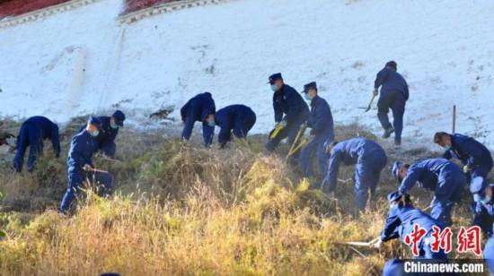 吉林快三微信红包群_上海快三app主页-藏布达拉宫进行一年一度防火除草
