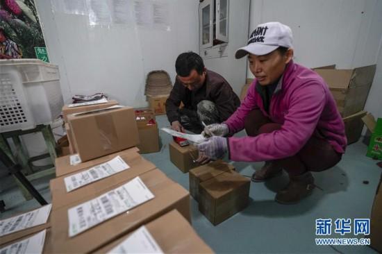 (图片故事)(14)枣乡网红的致富经