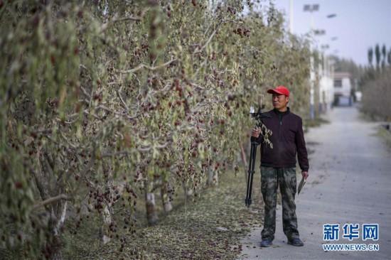 (图片故事)(3)枣乡网红的致富经