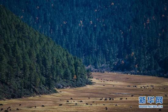 (环境)(4)秋色斑斓普达措