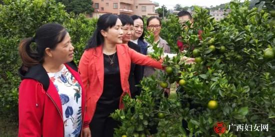 自治区妇联副主席岑宛�_到钦州调研妇女发展工作