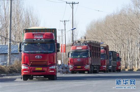 (经济)(1)黑龙江:新粮收购有序展开