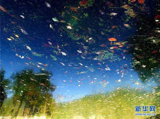 群山绝岭擎天一柱色彩斑斓秋色连天