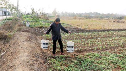 扬州遭遇60年一遇干旱 部分塘渠干涸