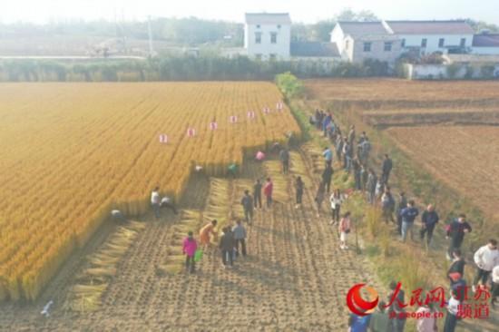 南京農業嘉年華江寧湯山分會場于11月8日舉辦 作者: 來源:人民網-江蘇頻道