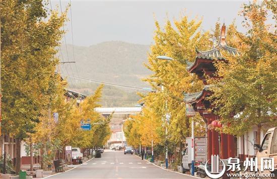 泉州德化:银杏黄 惹人醉