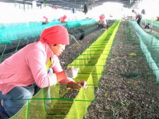 戴家村的漁網編織產業讓村民們人人有事做