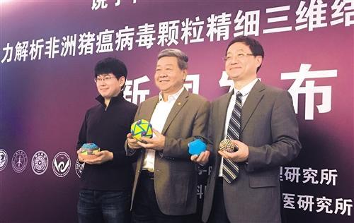 中国の科学者、アフリカ豚コレラウイルスの詳細な3次元構造を初めて解析