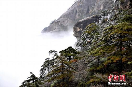 安徽黃山迎今冬首場霧凇景觀
