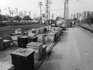 蘇州吃貨為喝蜂蜜偷蜂箱被判處拘役3個月