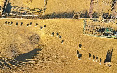 依河有绿洲好喜欢你歌词大漠行白羊