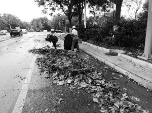 無錫環衛工工作量增三倍 每天清掃落葉10噸左右