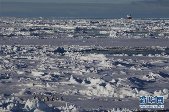 """""""雪龍兄弟""""在企鵝群注視下穿越南極圈"""