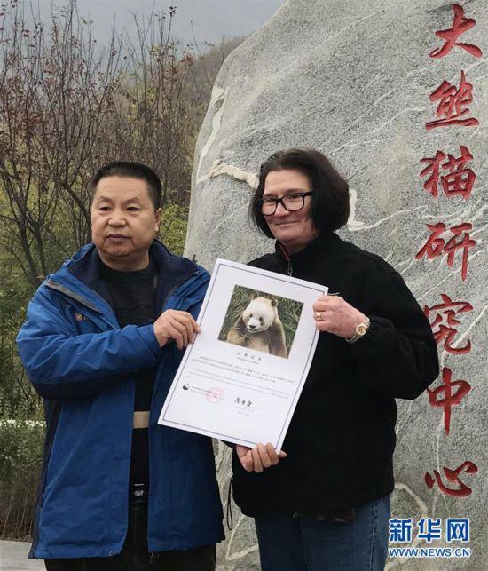 """(图文互动)(2)全球唯一圈养棕色大年夜熊猫""""七仔""""被毕生认养"""