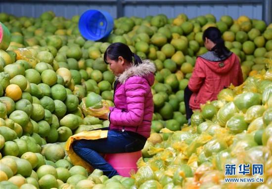 (社会)(3)广西鹿寨:做大做强产业 提高脱贫质量